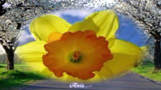 Wielkanocna piosenka – SPOKOJNYCH i ZDROWYCH SWIAT!!!!