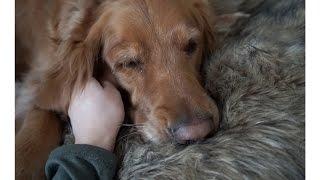Puppy Lovin' & Shabby Chic Home Decor