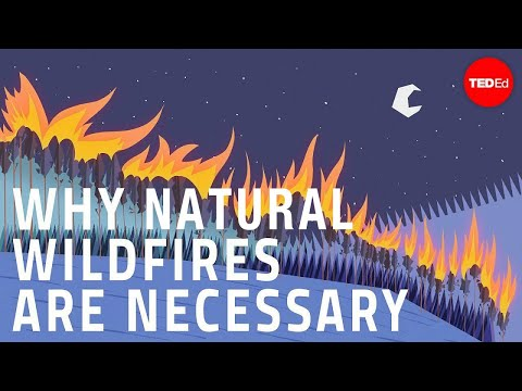 Why Wildfires Are Actually Helpful For The Environment