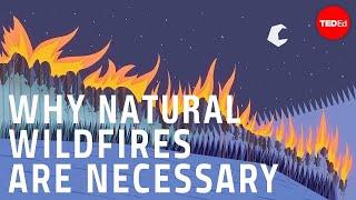 森林火災が必要な理由 - ジム・シュルツ