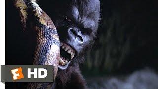King Kong (5/9) Movie CLIP - Snake vs. Kong (1976) HD