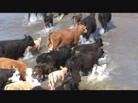 Cowboy Life in South Dakota