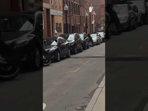 Seagull Swallows Rat Whole on Boston Street