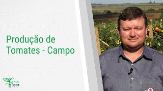 DEBATE – Do campo à mesa – Produção de tomates – Campo