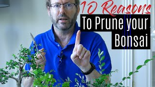 Bonsai Care - How to prune your Bonsai tree  |  Part 1