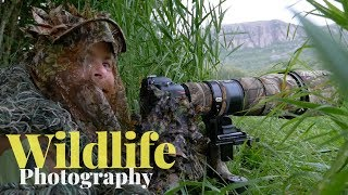 Encounter with a roe deer buck | WILDLIFE PHOTOGRAPHY - red deer,camouflage