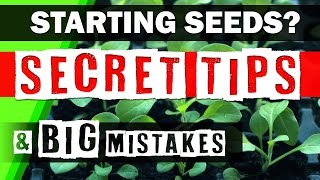 How to Start Seeds - Seed Starting Tips & Big Mistakes 🌱