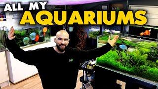 HUGE Fish Room Tour!! 32 Aquariums in 2 Studios (must see!) | MD Fish Tanks