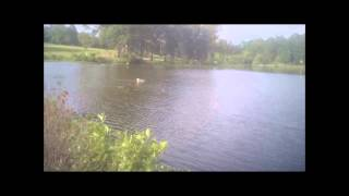 R/C Airboat FPV maiden voyage with camera and video transmitter installed