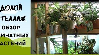 ДОЛОЙ СТЕЛЛАЖ обзор комнатных растений часть 1