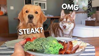 Dog Reviews Food With Husky | Tucker Taste Test 17