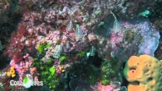preview picture of video 'Gozo - diving holiday 09/2012'