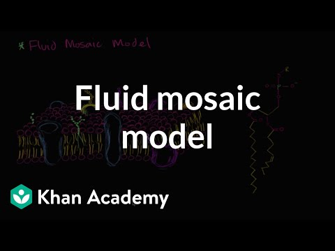Diagram Of Fluid Mosaic Model Cell Membrane Harley Davidson Motorcycle Parts Membranes Video Khan Academy