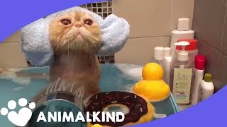 Lather, rinse, repeat: lessons from a kitten