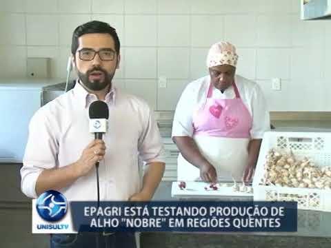 Epagri está testando produção de alho em regiões quentes