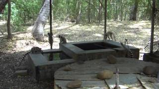 preview picture of video 'Berenty 2010 - Maki Catta - Part.3 - Madagascar - Fort-Dauphin'