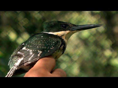 Cerritos de indios / 3 / Biodiversidad
