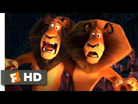 Madagascar: Escape 2 Africa (2008) - The Lion Dance Scene (9\/10) | Movieclips