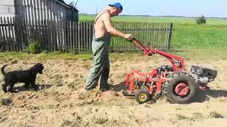 Картофелекопалка КМ-1П дает урожай 2019 года