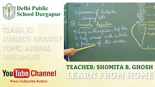 CLASS XI   TOPIC: ANIMAL SPECIMENS   BIOLOGY   LAB   DPS DURGAPUR
