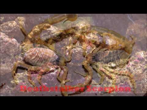 Ano ang mga pangarap parasites sa pagkain