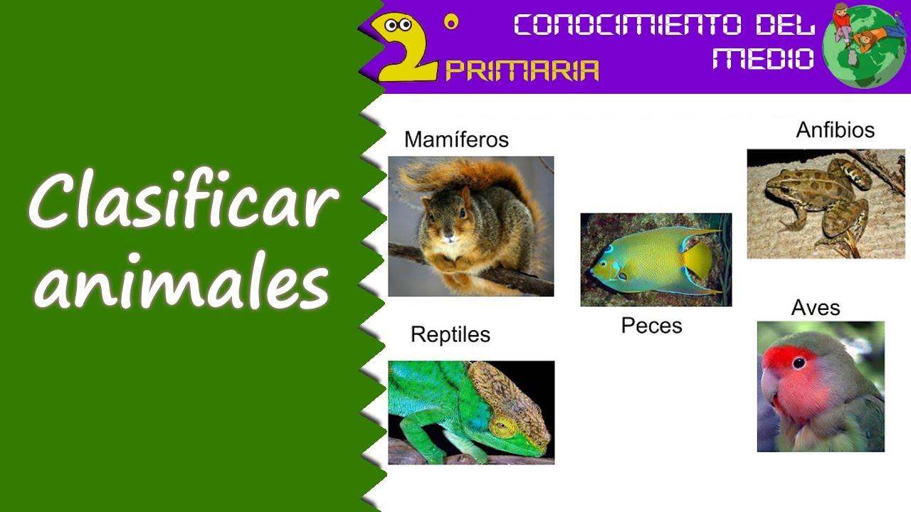 Cono, 2º Primaria. Tema 4. Clasificación de animales