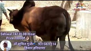 hldb hisar - मुफ्त ऑनलाइन वीडियो