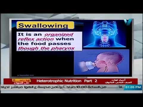 أحياء لغات للصف الثاني الثانوي 2021 - الحلقة 5 - Heterotrophic Nutrition part 2