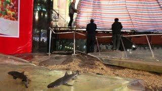Shark Tank Bursts Open into Busy Mall thumbnail