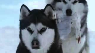 Собаки, Ромео и Джульетта
