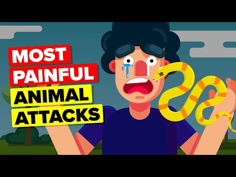 Most Painful Animal Attacks Human Could Ever Endure