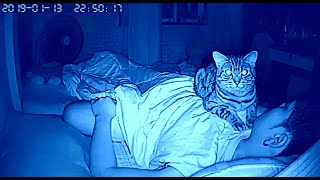 [Pics] Cat won't stop staring at dad all night, dad checks video and realizes why