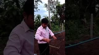 preview picture of video 'ការរៀបប្រព័ន្ធតំណក់ទឹកតាមបច្ចេកទេស សម្រាប់ស្រោចស្រពដំណាំ - Drip irrigation system'
