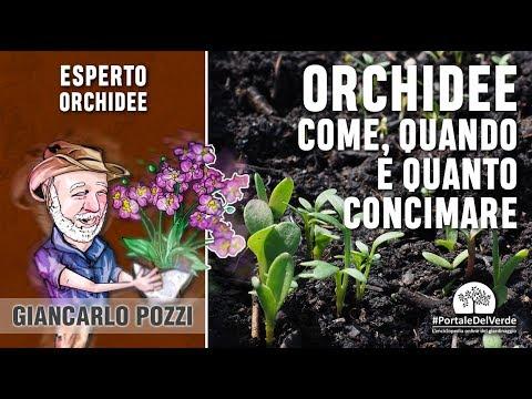 Come, quando e quanto si concima l'orchidea?