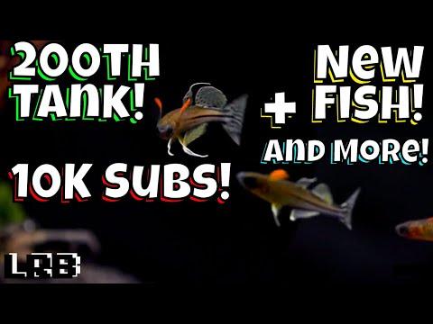 200th Aquarium! 10K Subscribers! New Fish and More!