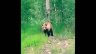 ⛔️🔞 Прикол с медведем! Реакция туристов при встрече с медведем!!! #1