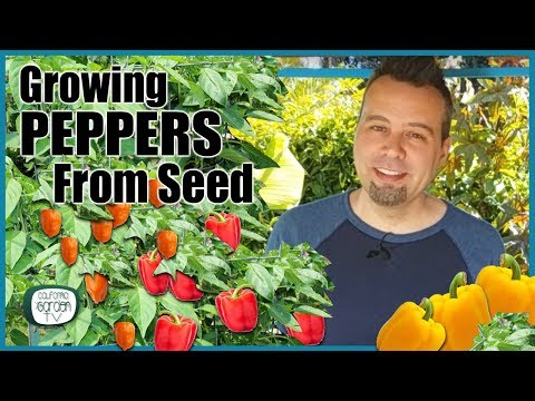 , title : 'How to Grow Peppers from Seed // Step by Step Instructions