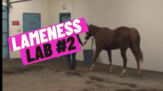 Lameness Lab #2: Is this horse lame?