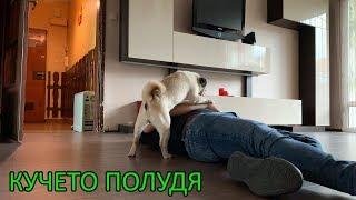 НАПРАВИХ СЕ НА УМРЯЛ ПРЕД КУЧЕТО СИ (ПРАНК)