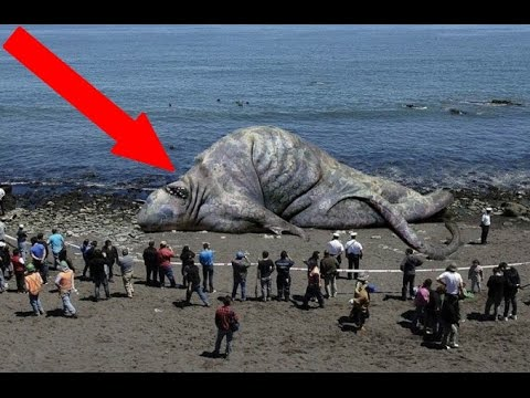 Most STRANGE Things Found On The Beach!