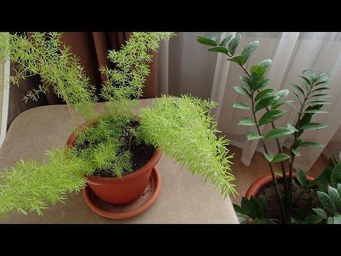 Мои комнатные растения.Комнатные цветы.