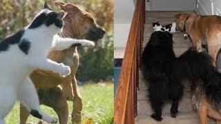 Ngakak! 10 Foto Ini Tunjukkan Saat Kucing Mengalahkan Anjing, Nomor 2 Super Konyol