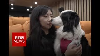 Pampered pooches: China