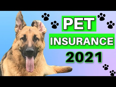 , title : 'PET INSURANCE Review: Cost, Coverage, Best Providers & If YOU Need It...
