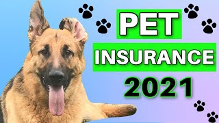 PET INSURANCE Review: Cost, Coverage, Best Providers & If YOU Need It...