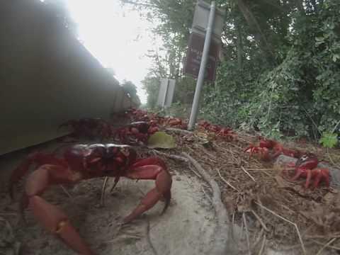 Les comprimés des helminthes selon oukraine