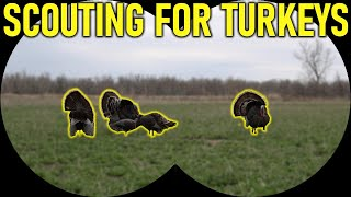 How To Scout for Turkeys | Turkey Hunting for Beginners