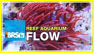 FAQ #19: How much water flow do I need in my reef aquarium? | 52 FAQ