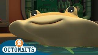 Octonauts - Shocking! | Full Episodes | Cartoons for Kids