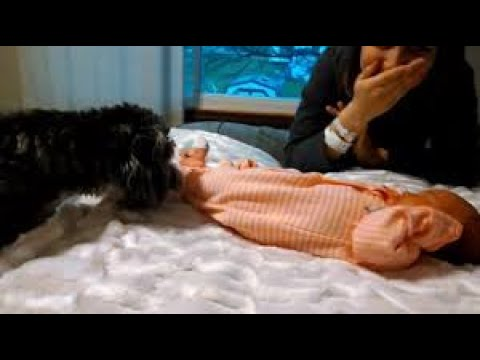 Doggies meet newborn baby for the first time